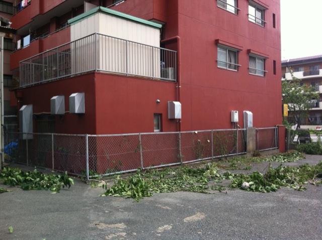 植木伐採 福岡