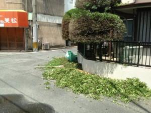 庭木剪定 まるがり