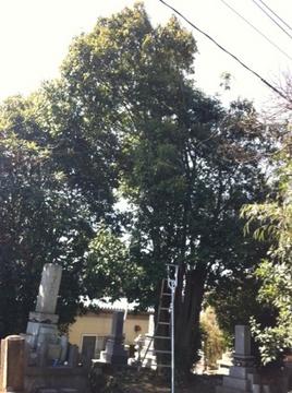 お墓の樹木伐採剪定
