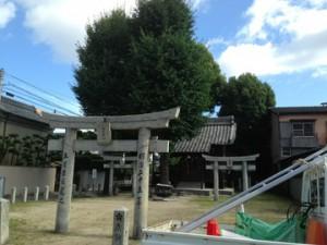 福岡 神社の庭木の剪定