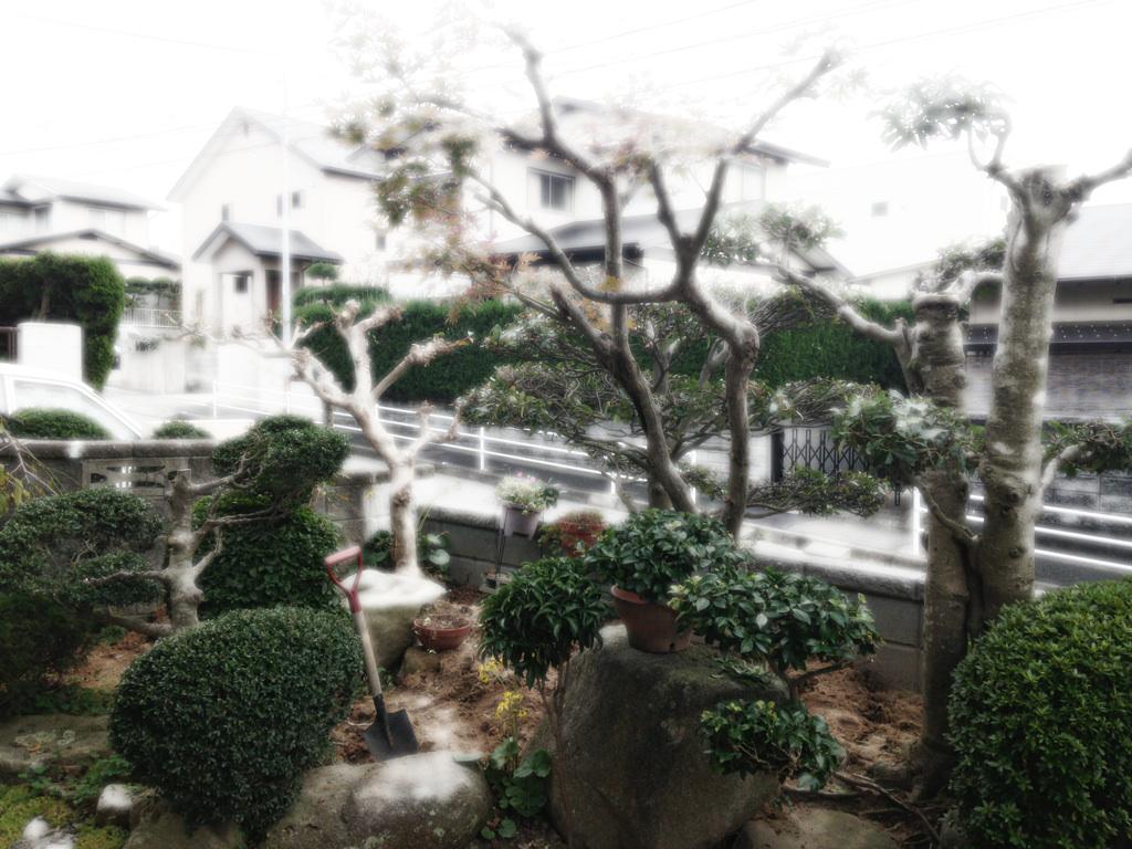 冬 樹木屋 福岡