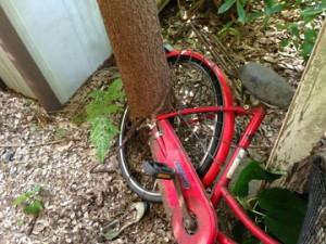 植木や 自転車