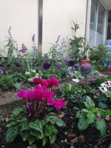 福岡 花壇 お花植え
