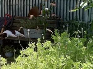庭師さんの庭