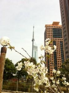 福岡市 タワー